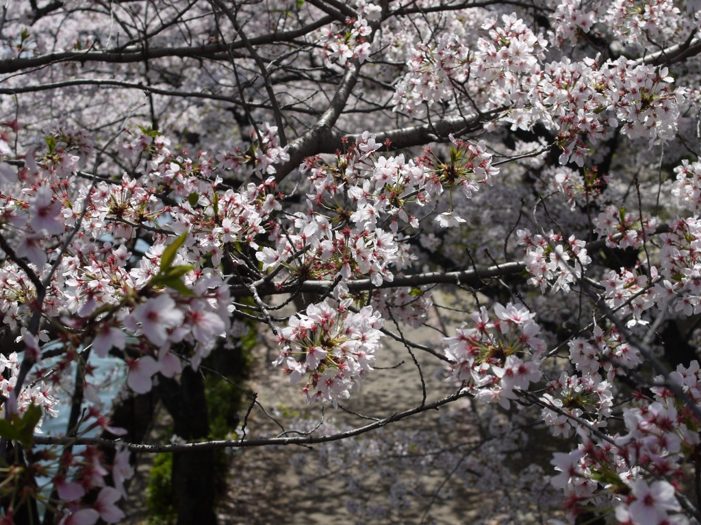 2013-04-05_10-12-05