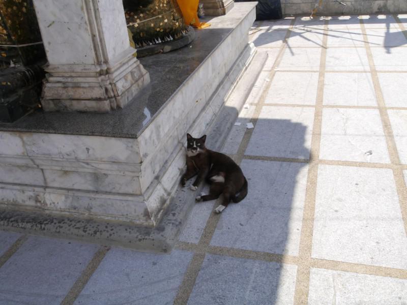 ワット・フアラムポーンのネコ