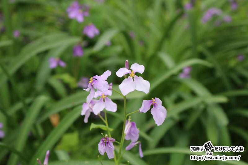 ゲン頭渚公園の花